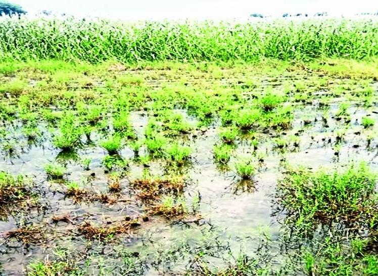 बिहार के 30 जिलों में बाढ़ और अतिवृष्टि के कारण 875.27 करोड़ का नुकसान, अधिकारियों ने सरकार को भेजी रिपोर्ट पटना,Patna - Dainik Bhaskar