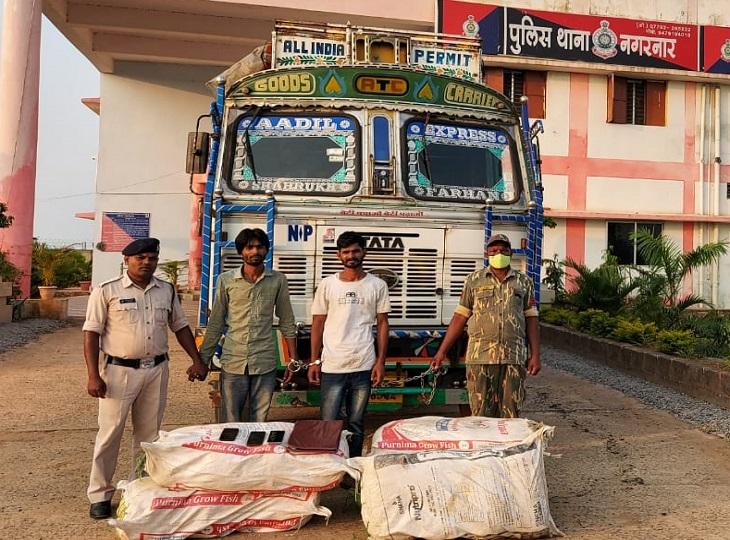 बस्तर में 10 लाख रुपए के गांजा के साथ 2 तस्करों को गिरफ्तार किया गया है। - Dainik Bhaskar