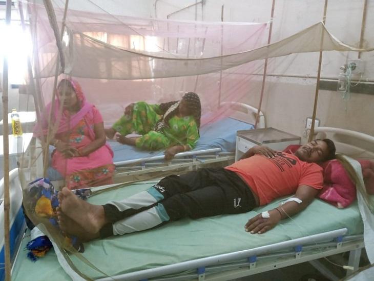 डेंगू के 5 और कोरोना के 3 नए केस मिले, डेंगू मरीजों की संख्या पहुंची 155, नगर निगम ने तेज की फॉगिंग फरीदाबाद,Faridabad - Dainik Bhaskar
