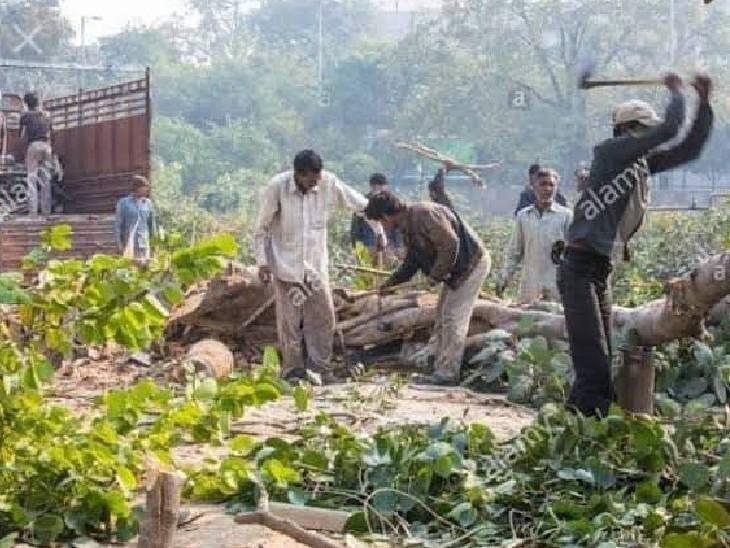 शिवपुरी में विधायक ने उठाया मामला, तब चेता महकमा, कार्रवाई करने पहुंचा जंगल|शिवपुरी,Shivpuri - Dainik Bhaskar