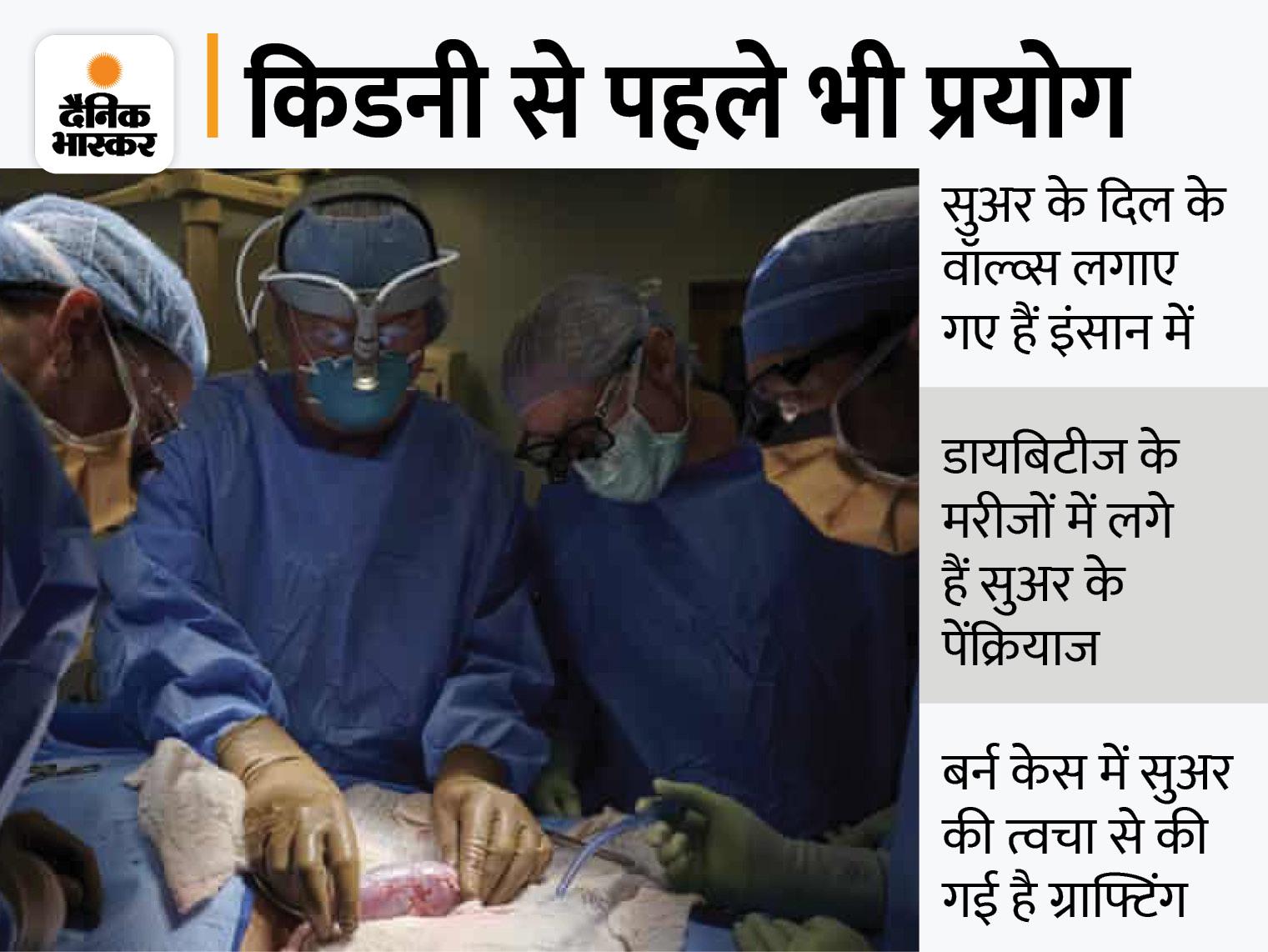 ब्रेन डेड था मरीज, परिवार की अनुमति से डॉक्टरों ने किया सुअर की किडनी का सफल ट्रांसप्लांट विदेश,International - Dainik Bhaskar