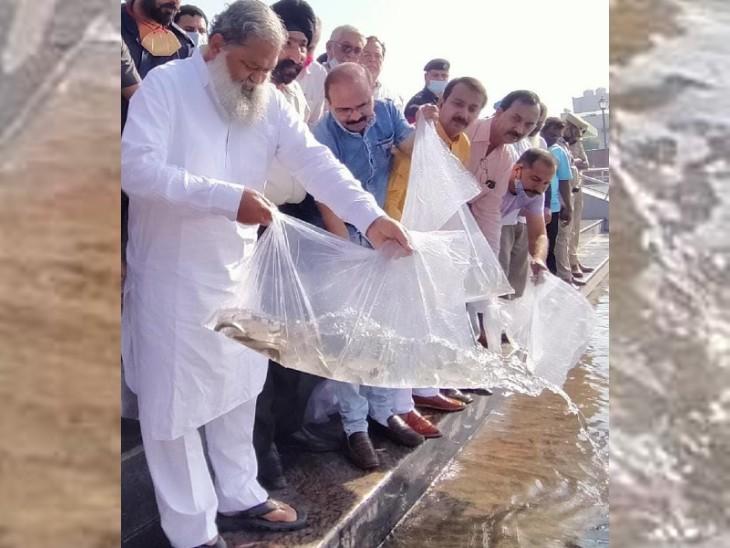 गृहमंत्री अनिल विज ने की घोषणा; बोटिंग करते वक्त झील में नजर आएंगी रंग-बिरंगी मछलियां|अम्बाला,Ambala - Dainik Bhaskar