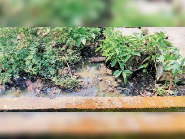 आंबेडकर वार्ड में नालियां चोक, चेम्बर की नहीं हो रही सफाई|नेपानगर,Nepanagar - Dainik Bhaskar