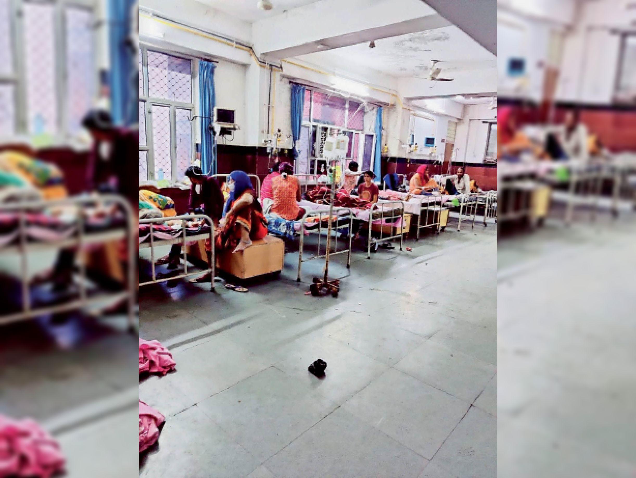 डेंगू के 25 राेगी मिले, स्क्रबटायफस के 2 नए केस|कोटा,Kota - Dainik Bhaskar