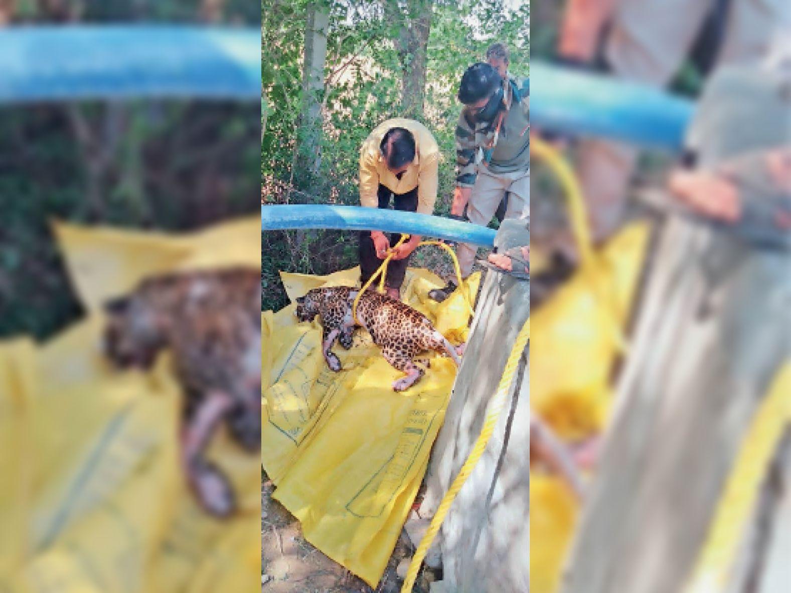 46 घंटे तक पानी में रहने से चमड़ी उतरी, शव फूला|पाली,Pali - Dainik Bhaskar