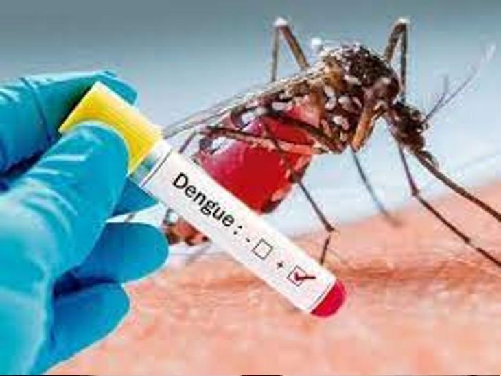 डेंगू के कारण बढ़ी प्लेटलेट्स की मांग, 3 लैब से राेज मिल पा रही 45 से 50 यूनिट एसडीपी|अलवर,Alwar - Dainik Bhaskar