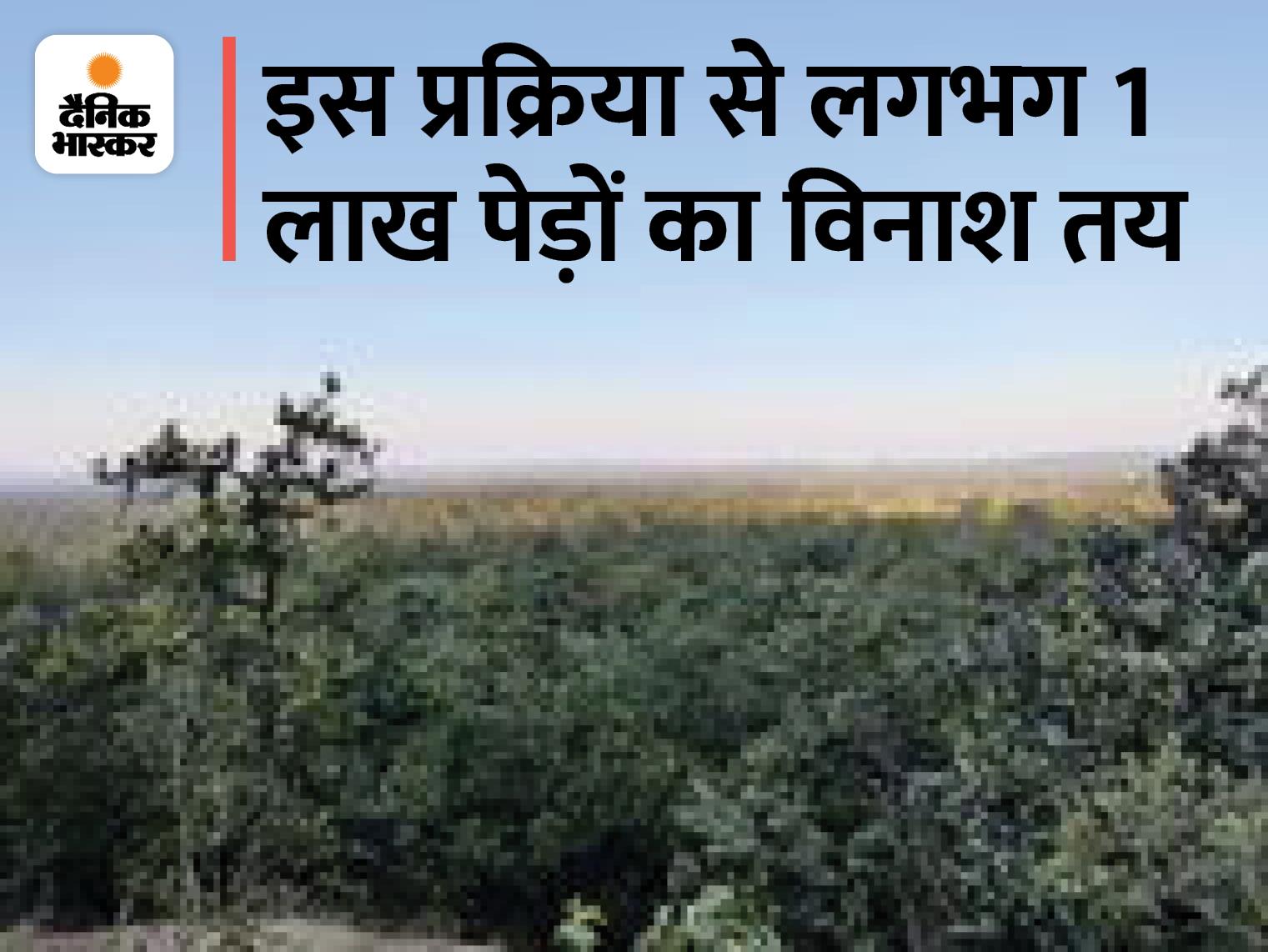 जिसे बचाने आदिवासी 300 किमी पैदल चलकर राजभवन पहुंचे, उसी जंगल को उजाड़ने का क्लीयरेंस जारी|रायपुर,Raipur - Dainik Bhaskar