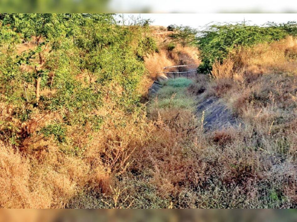रबी बुवाई के लिए खेत तैयार करने में जुटे किसान, सता रही सिंचाई की चिंता|कसरावद,KASRAWAD - Dainik Bhaskar