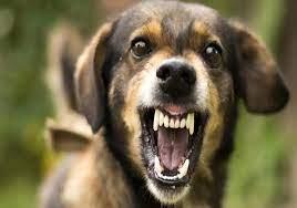 पिपरिया में पालतू कुत्ते ने 12 साल के बालक पर किया हमला, शिकायत के बाद कुत्ता मालिक पर FIR|होशंगाबाद,Hoshangabad - Dainik Bhaskar