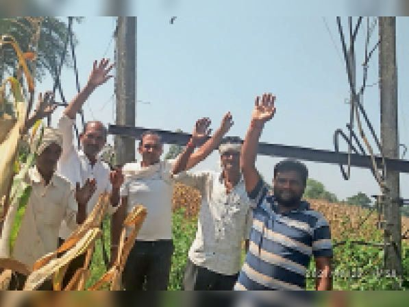 ट्रांसफार्मर खराब होने से सूखने लगी गोभी की फसल, किसानों ने जताया आक्रोश|घोड़ाडोंगरी,GHODADONGRI - Dainik Bhaskar