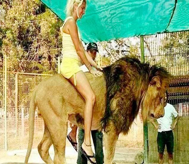 PICS: पाहा अनोखा नजारा, या झूमध्ये पर्यटक करतात भयावह सिंहांची सैर| - Divya Marathi