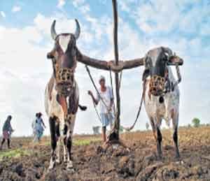 शेतकरीदादा दमानं, धीरानं ! तज्ज्ञांचा शेतक-यांना सल्ला|पुणे,Pune - Divya Marathi