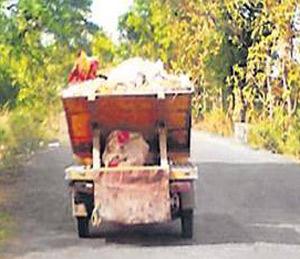 हायड्रोलिक ऑटोला गळती; टेंभूरखेडा रस्त्याचा 'कचरा'|अमरावती,Amravati - Divya Marathi