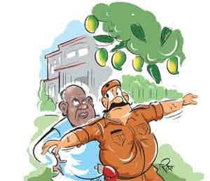 वादाचा रस: मांझींच्या बंगल्यातील आंब्यांवर नितीशकुमार यांचा खडा पहारा|देश,National - Divya Marathi
