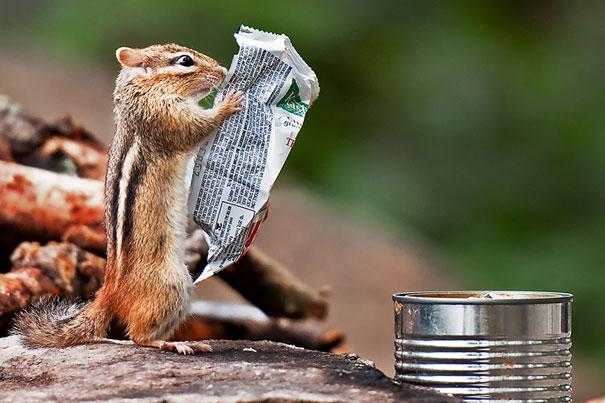 Funny: हे Perfectly timed photos पाहून तुमची हसून हसून दमछाक होईल| - Divya Marathi