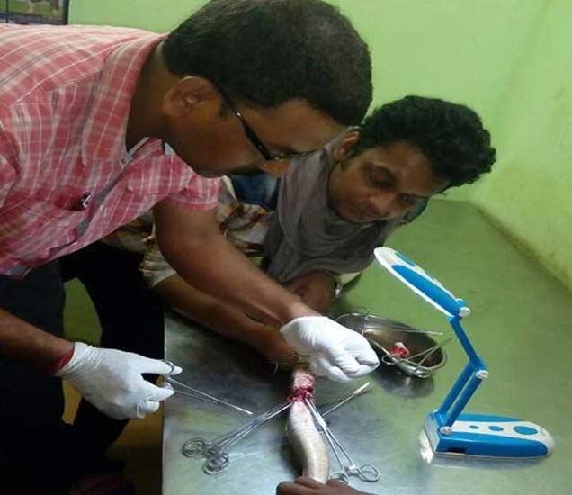 सापाचे ऑपरेशन करताना डॉ.सिरमोर - Divya Marathi