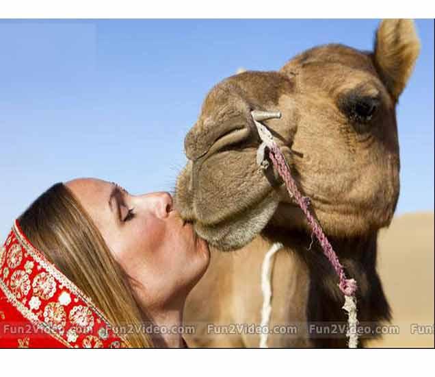 FUNNY: LUCKY ANIMALS, हे फोटोपाहून तुम्हालाही प्राणी व्हावंस वाटेल !| - Divya Marathi