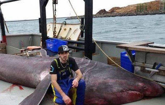 80 वर्षांत पहिल्यांदा चुकीने पकडल्या गेला महाकाय शार्क, 21 फुट आहे लांब  - Divya Marathi