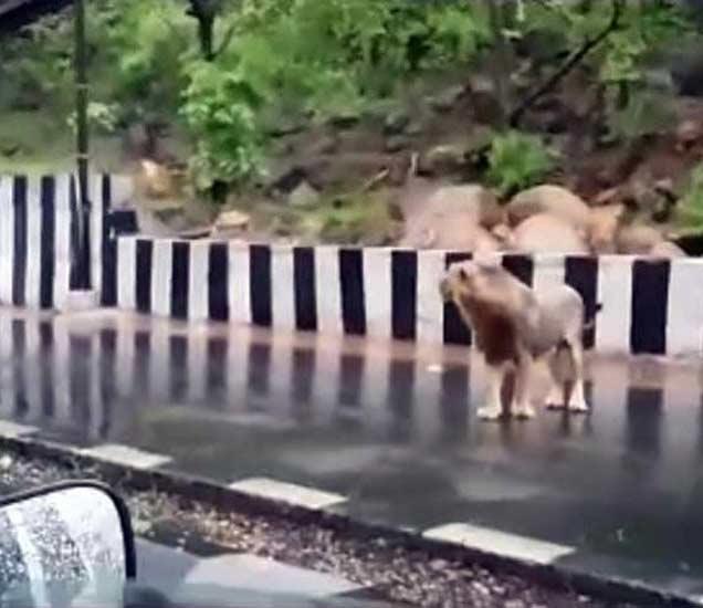 मान्सूनचा कहर : गुजरातमध्ये 51 दगावले; वन्यप्राणी रस्त्यावर, पाहा Video देश,National - Divya Marathi