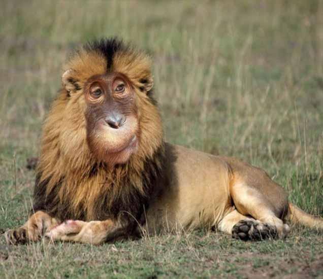 FUNNY ZOO: इथे आहे वाघासारखी खारूताई आणि माकडासारखा सिंह, पाहून डोके चक्रावेल| - Divya Marathi
