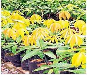 पर्यावरण संवर्धनासाठी वकील संघाचा पुढाकार अहमदनगर,Ahmednagar - Divya Marathi