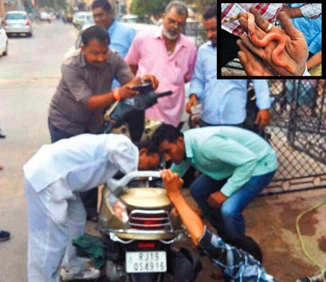 PHOTOS: हेल्मेट काढण्यासाठी उघडली स्कूटीची डिक्की, निघाला साप देश,National - Divya Marathi