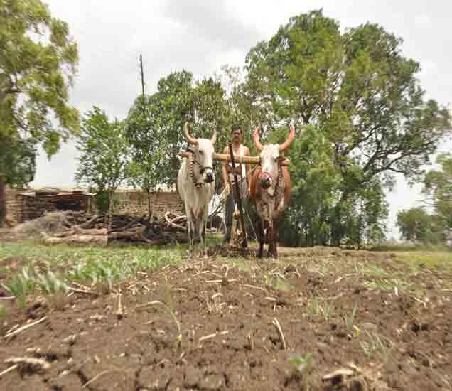 पाणी फक्त डोळ्यांत; पावसाने दडी मारल्याने पिकांमध्ये औत... औरंगाबाद,Aurangabad - Divya Marathi