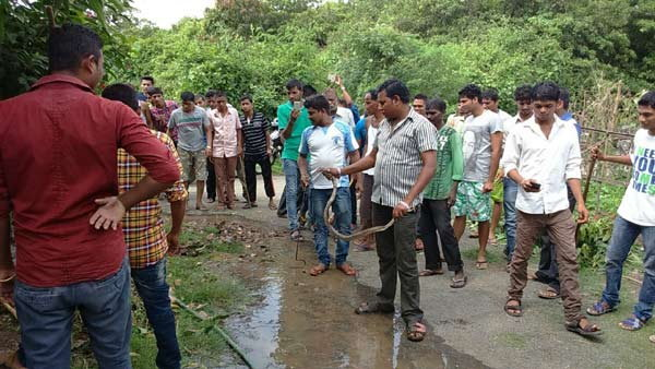 PHOTOS: अंगणात नागिनसह निघाले 19 साप, लोकांचा उडाला थरकाप देश,National - Divya Marathi