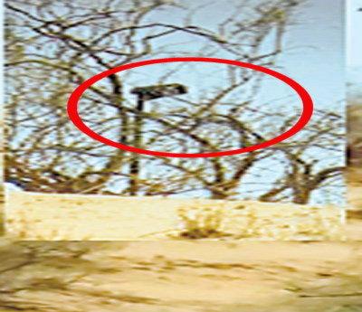 भारत पाकिस्तान सीमेवर पाकिस्तानने झुडपात लावलेले कॅमेरे - Divya Marathi
