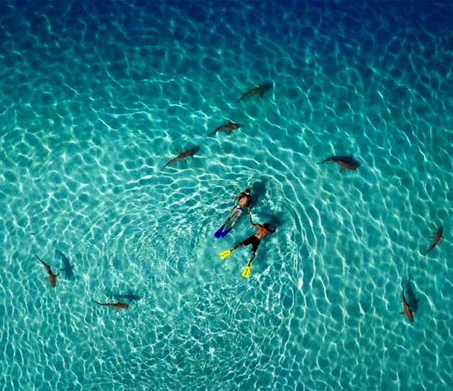शार्कबरोबर स्विमिंग करताना डायव्हर्सच्या फोटोला पुरस्कार मिळाला. - Divya Marathi