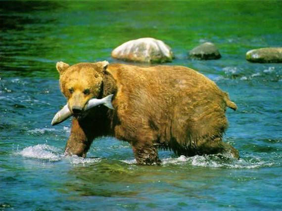 FUNNY: \'मित्रा दात घासत जा ना रोज\',  प्राण्यांचे असे फोटो जे तुम्हाला खळखळून हसवतील  - Divya Marathi