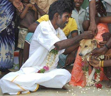 अहो आश्चर्यम्: येथे कुत्रा, साप आणि घोड्यासोबतही होतो विवाह!  - Divya Marathi