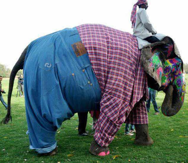 Funny: It Happens only in INDIA, पाहा भन्नाट फोटो आणि हसा खळखळून|देश,National - Divya Marathi