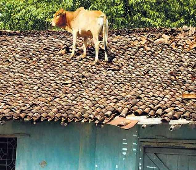 FUNNY: हा काय प्रकार हाय, हे पाहून तुम्हीही म्हणाल काहीही होतं इथे..|देश,National - Divya Marathi