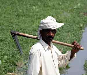 देशातील एक लाख शेतकरी खासदारांना देणार गावची माती|मुंबई,Mumbai - Divya Marathi