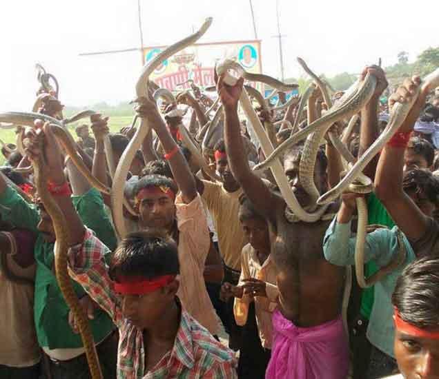ग्रामस्थांनी नदीतून पकडलेले साप. - Divya Marathi