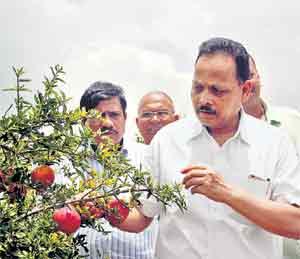 आंधळेवाडीत कृषी आयुक्त विकास देशमुख यांनी डाळिंबाच्या बागेची पाहणी केली. - Divya Marathi