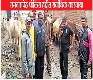 नवीन बैदपुरा येथून गोऱ्ह्यांना पोलिसांनी ताब्यात घेतले असून, आरोपीविरुद्ध कारवाई केली आहे. - Divya Marathi