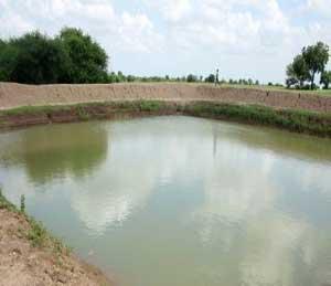 जलयुक्त शिवाराचे रोल माॅडेल, लोकसहभागातून सर्वाधिक कामे जिल्ह्यात|सोलापूर,Solapur - Divya Marathi