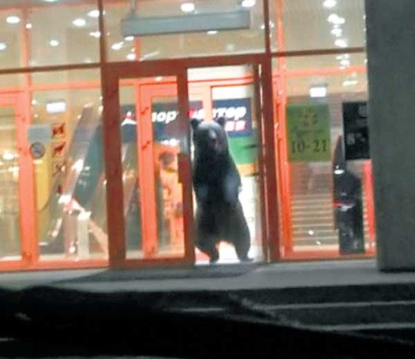 मॉलबाहेर उभे असलेले अस्वल. - Divya Marathi