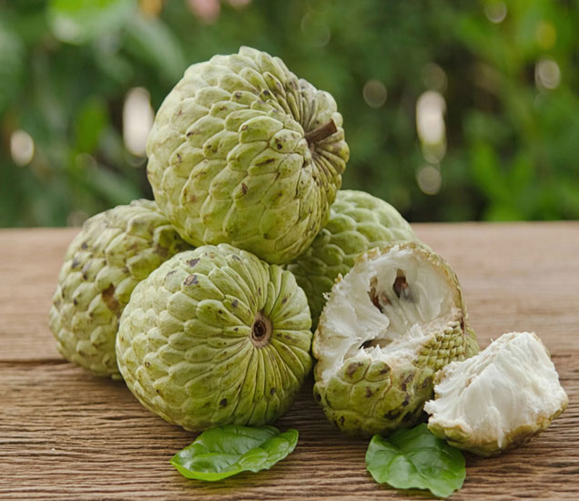 हे 1 फळ आहे 10 रोगांवर रामबाण औषध, एकदा अवश्य वापरुन पाहा...|देश,National - Divya Marathi