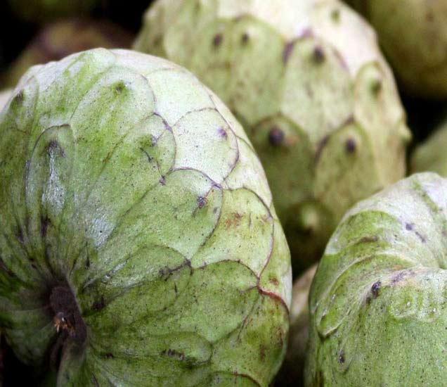 हे 1 फळ आहे 10 रोगांवर रामबाण औषध, एकदा अवश्य वापरुन पाहा...  - Divya Marathi