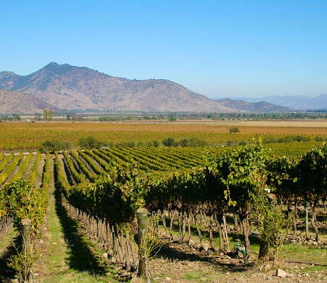 वाइन मेकिंग सोबतच टेस्टचा आनंद देण्यासाठी प्रसिध्द आहेत ही 8 ठिकाणे| - Divya Marathi