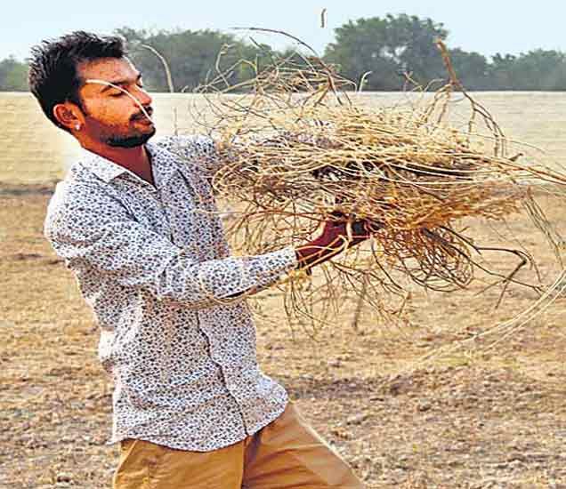 या आहेत पहिल्या MBA सरपंच, लाखो रुपयांची नोकरी सोडून गावाचा चेहरा बदलला|देश,National - Divya Marathi