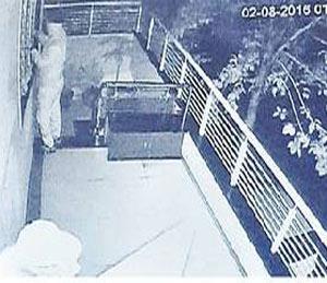दरवाजाचे लॅच लॉक टॅमीने तोडताना चोरटा. - Divya Marathi