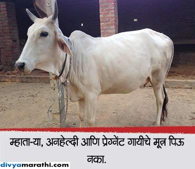 वजन कमी करण्यापासून केसांना हेल्दी बनवण्यापर्यंत, गायीचे असे 12 फायदे...|जीवन मंत्र,Jeevan Mantra - Divya Marathi