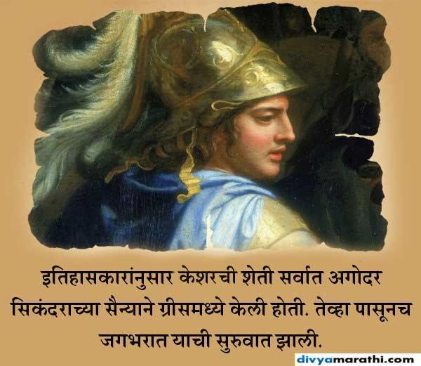 सिकंदरने केली केशर पिकाची सुरुवात,वाचा 15 रंजक फॅक्ट्स... देश,National - Divya Marathi