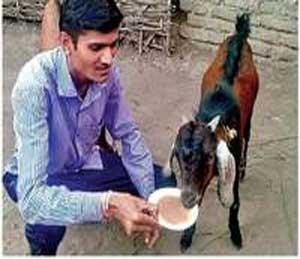 प्राणीमित्र जयकुमार राठोड यांच्या हस्ते चहा पितांना बकरा. - Divya Marathi