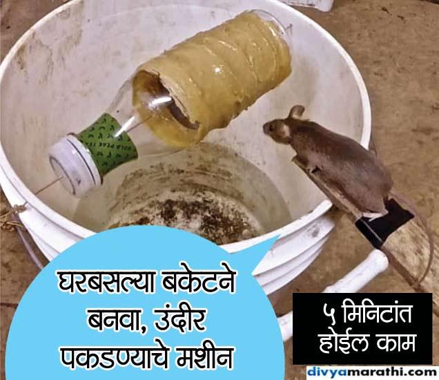 उंदीर न मारता पकडण्याच्या सर्वात Simple टिप्स, घ्या जाणुन...|देश,National - Divya Marathi