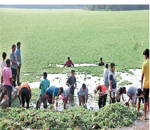 संभाजी तलावातील जलपर्णी काढण्याच्या मोहिमेस शनिवारी सकाळी सुरुवात झाली. - Divya Marathi